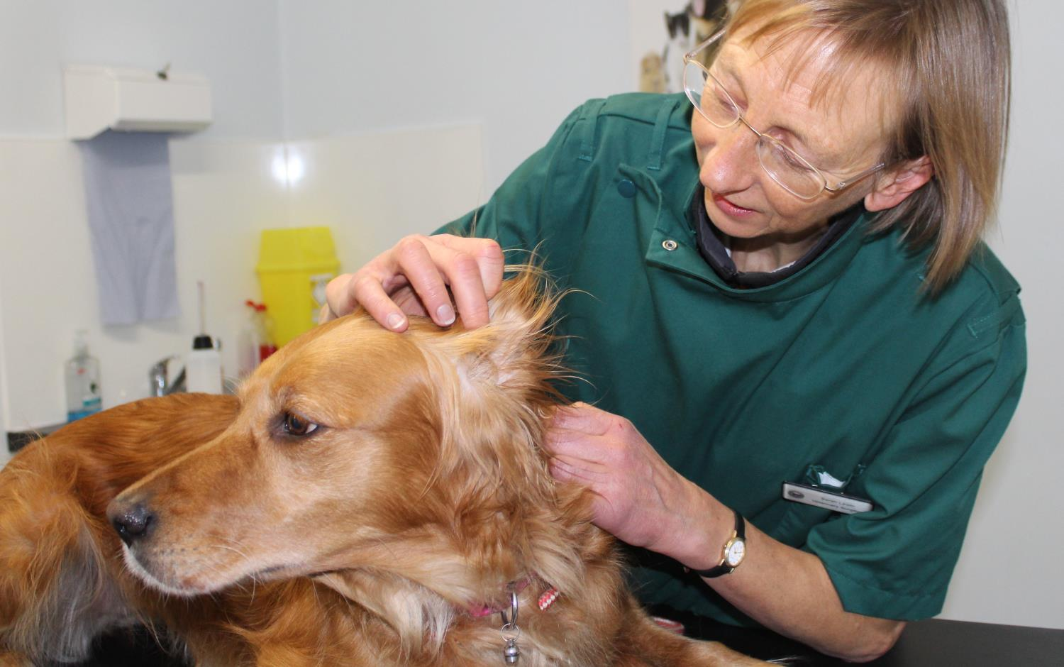 Small Animal Vet Consultations in Carlisle, Cumbria, from Coomara Vets