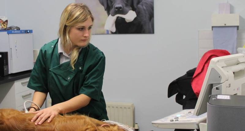 General Vet Services in Carlisle, Cumbria