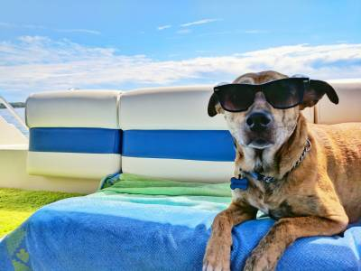 Pet Travel to the EU after Brexit